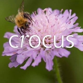 Crocus.co.uk