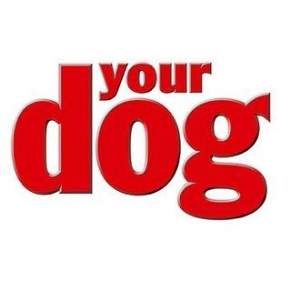 Yourdog.co.uk